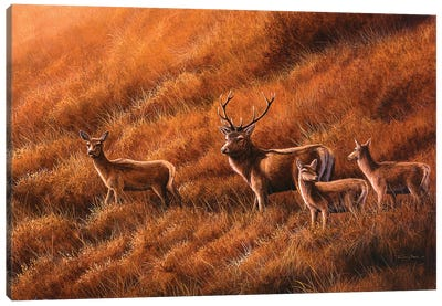 Autumn Hill - Stag And Hinds Canvas Art Print