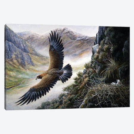 Golden Eagle Canvas Print #JYP85} by Jeremy Paul Canvas Art