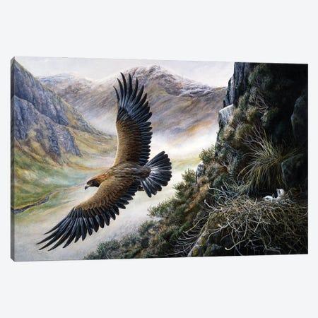 Golden Eagle Canvas Print #JYP85} by Jeremy Paul Canvas Art
