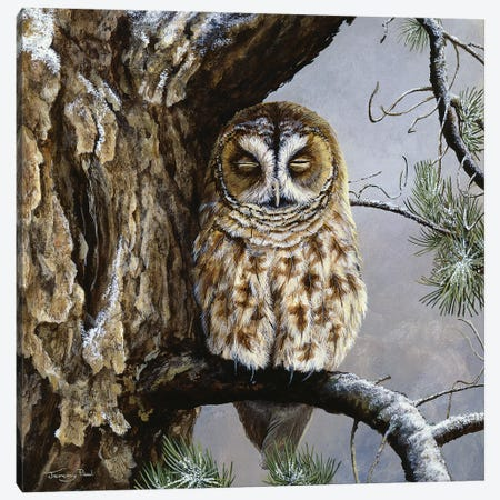 Half Asleep - Tawny Owl Canvas Print #JYP86} by Jeremy Paul Canvas Art