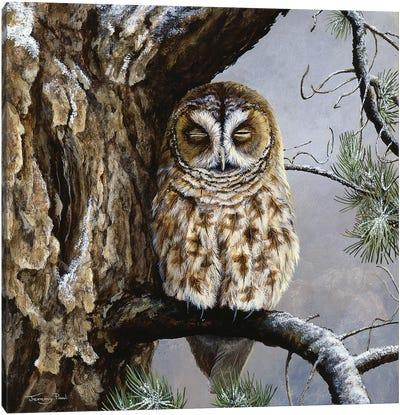 Half Asleep - Tawny Owl Canvas Art Print