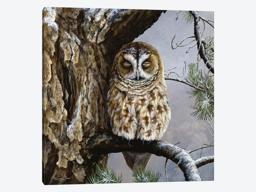 Half Asleep - Tawny Owl by Jeremy Paul 1-piece Canvas Print