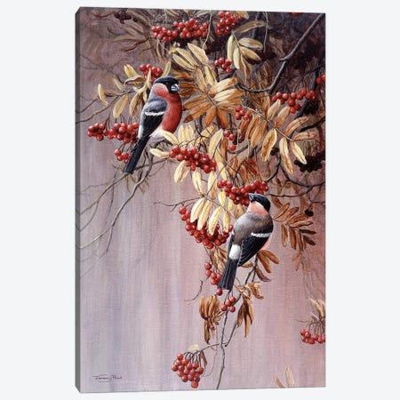 Bullfinches Canvas Print #JYP88} by Jeremy Paul Canvas Art Print