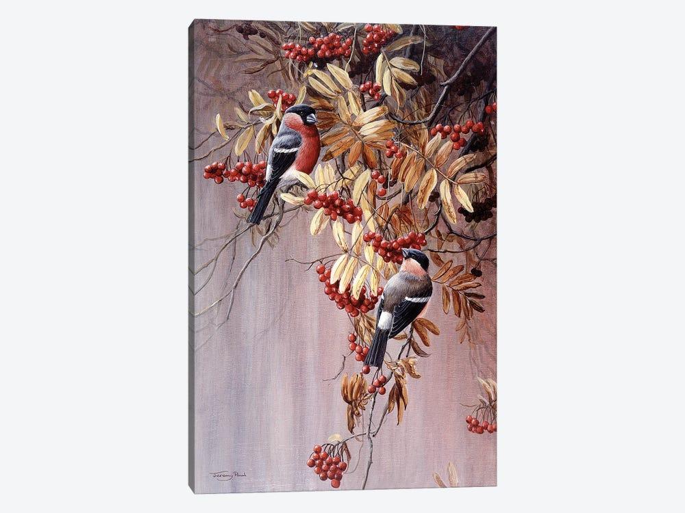 Bullfinches by Jeremy Paul 1-piece Canvas Art Print