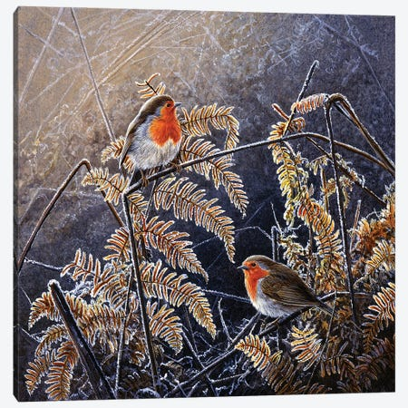 Frosted Gold - Robins Canvas Print #JYP90} by Jeremy Paul Canvas Artwork