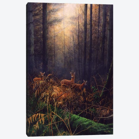 Autumn Mist - Roe Deer Canvas Print #JYP91} by Jeremy Paul Canvas Artwork