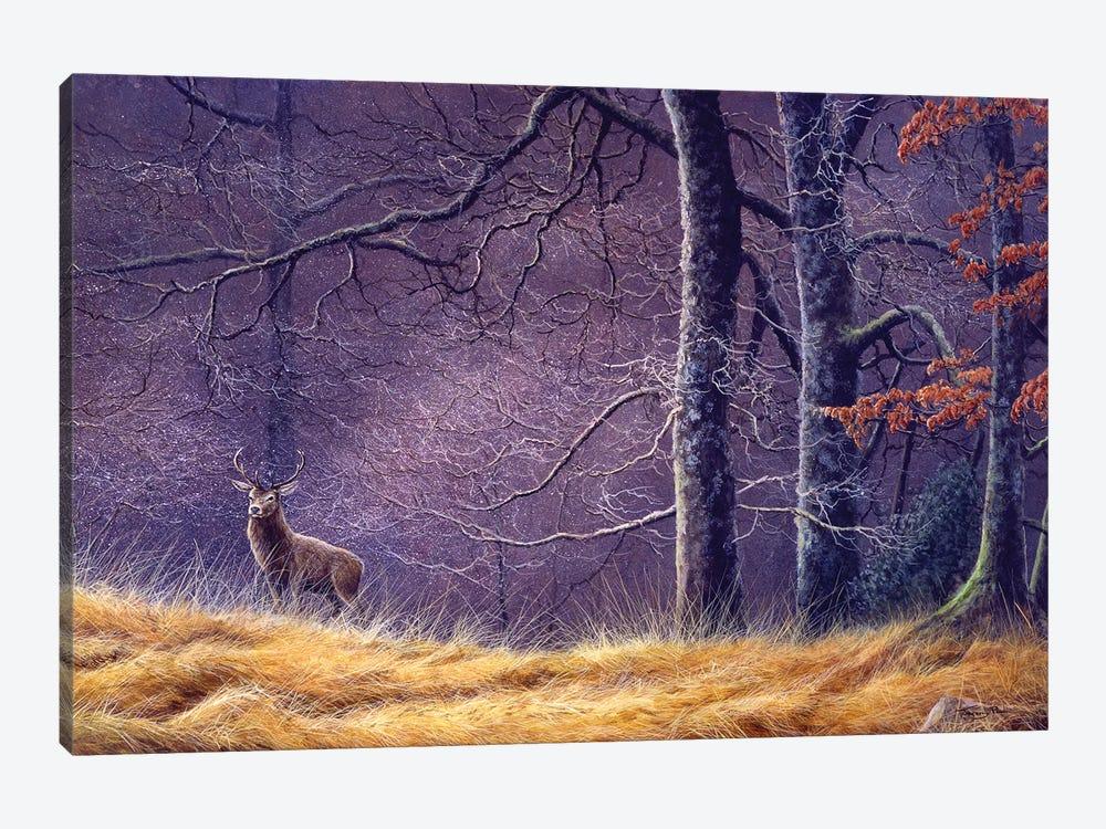 Woodland Encounter by Jeremy Paul 1-piece Canvas Wall Art