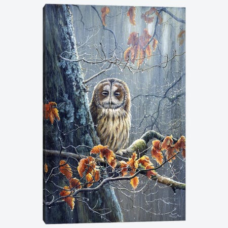 Sunshine And Showers - Tawny Owl Canvas Print #JYP93} by Jeremy Paul Canvas Artwork