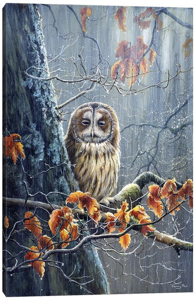 Sunshine And Showers - Tawny Owl Canvas Art Print