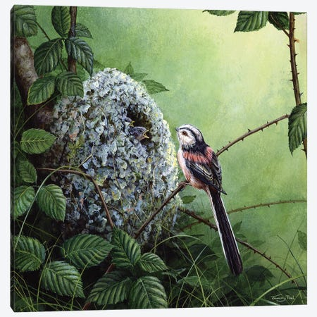 Long-Tailed Tit - At The Nest Canvas Print #JYP94} by Jeremy Paul Art Print