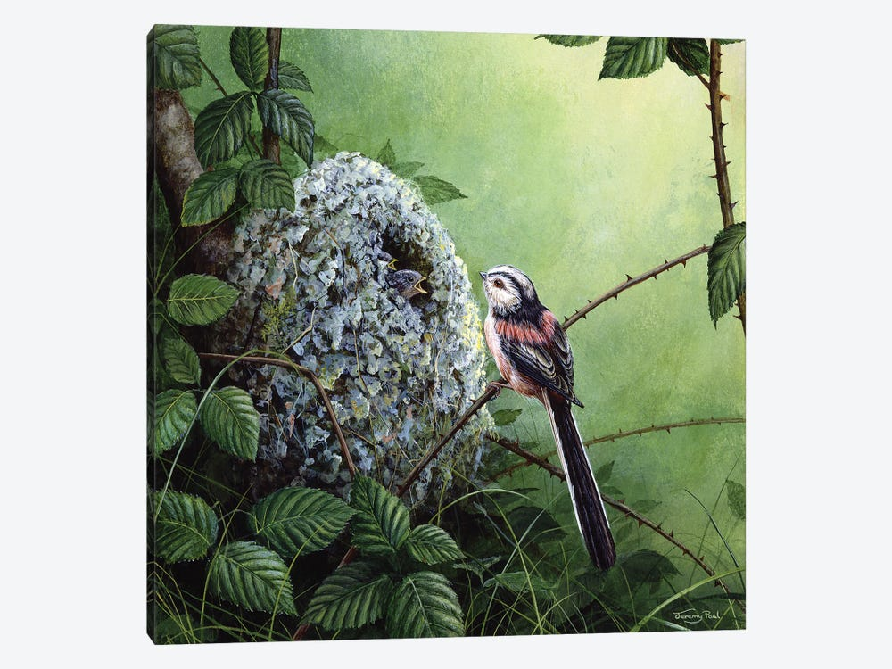 Long-Tailed Tit - At The Nest by Jeremy Paul 1-piece Canvas Art