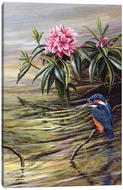 Kingfisher And Rhododendron Canvas Art Print
