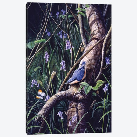Spring Blues - Nuthatch Canvas Print #JYP97} by Jeremy Paul Canvas Art Print