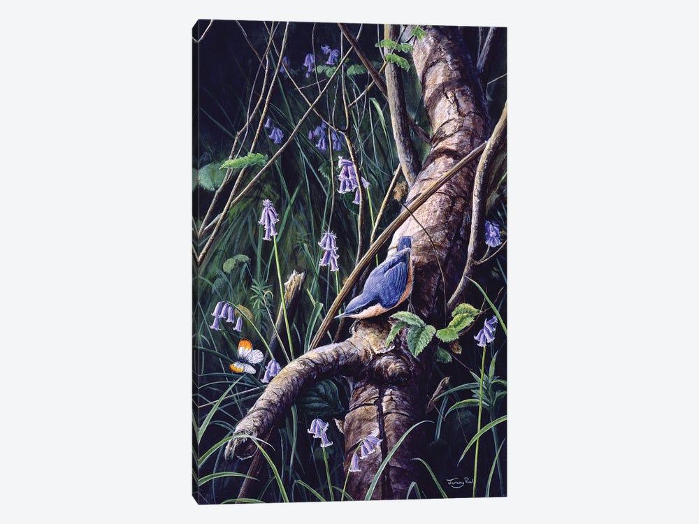 Spring Blues - Nuthatch by Jeremy Paul 1-piece Canvas Print