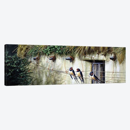 Old Thatch - Swallows Canvas Print #JYP98} by Jeremy Paul Canvas Art