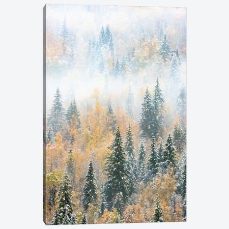 British Columbia, Canada. Early morning fog in a mixed tree forest, Wells Gray Provincial Park. Canvas Print #JZI12} by Judith Zimmerman Canvas Print