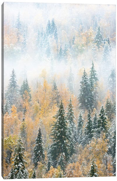 British Columbia, Canada. Early morning fog in a mixed tree forest, Wells Gray Provincial Park. Canvas Art Print