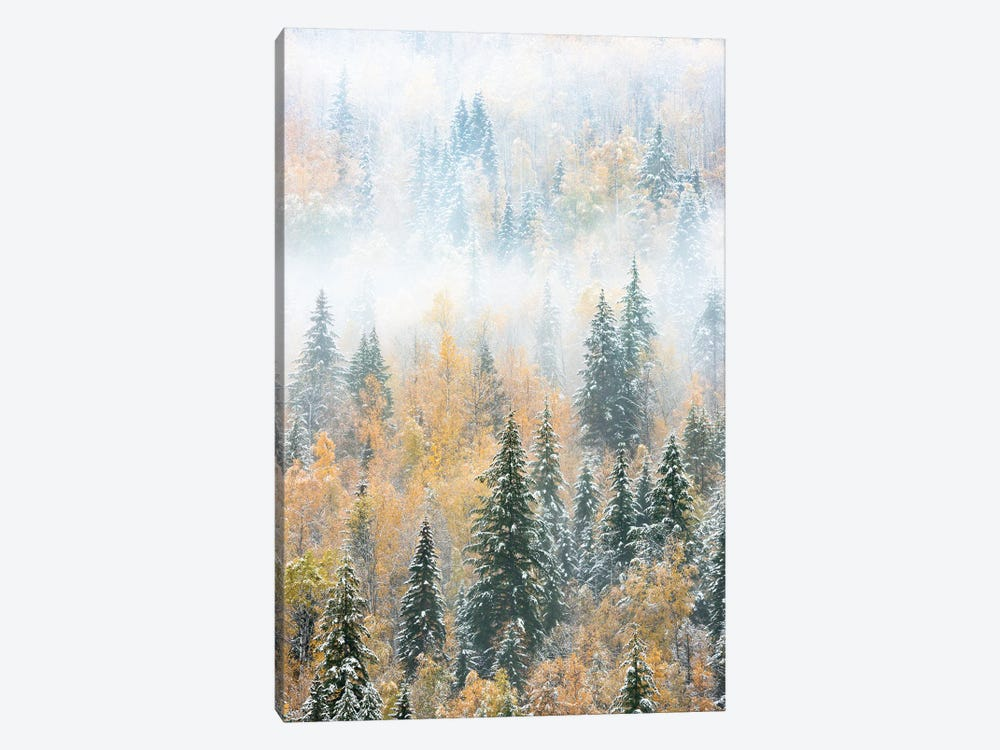 British Columbia, Canada. Early morning fog in a mixed tree forest, Wells Gray Provincial Park. by Judith Zimmerman 1-piece Art Print