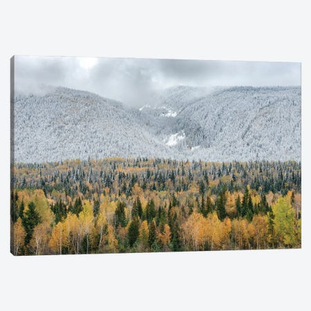 British Columbia, Canada. Mixed tree forest with light dusting of snow, Wells Gray Provincial Park. Canvas Print #JZI13} by Judith Zimmerman Art Print