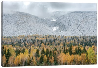 British Columbia, Canada. Mixed tree forest with light dusting of snow, Wells Gray Provincial Park. Canvas Art Print