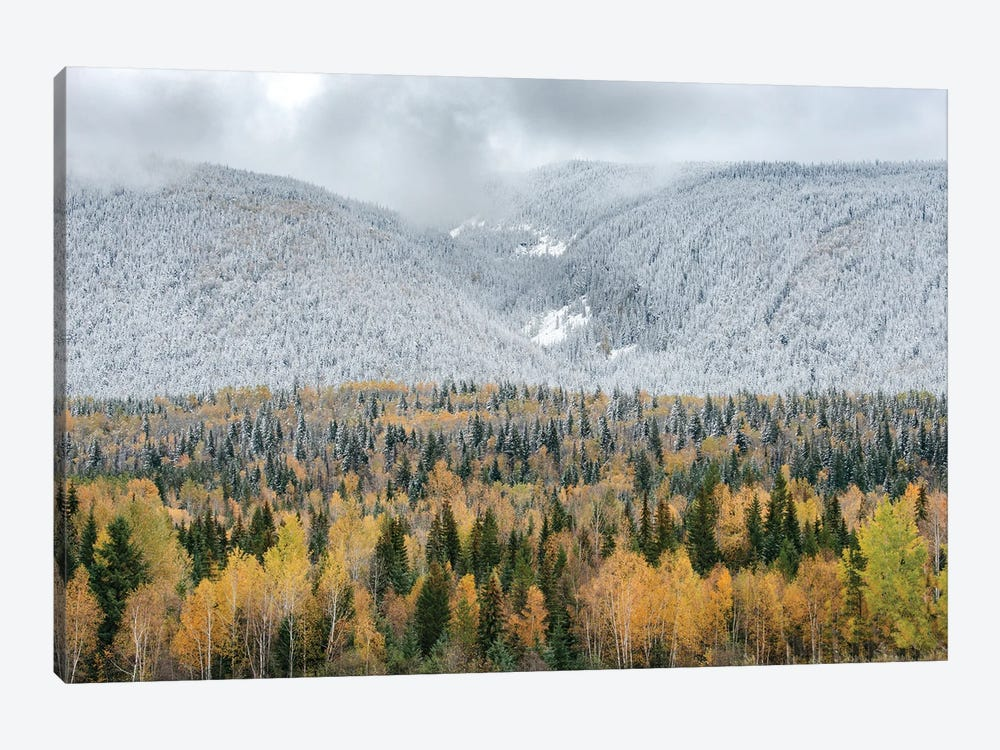 British Columbia, Canada. Mixed tree forest with light dusting of snow, Wells Gray Provincial Park. by Judith Zimmerman 1-piece Canvas Wall Art