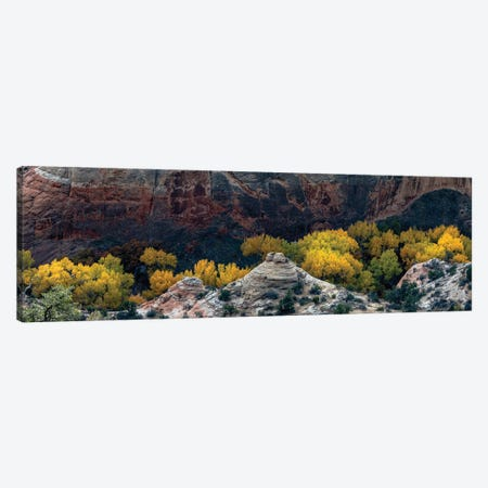 USA, Utah. Autumn cottonwoods and sandstone formations in canyon, Grand Staircase-Escalante National Monument. 3-Piece Canvas #JZI17} by Judith Zimmerman Canvas Wall Art