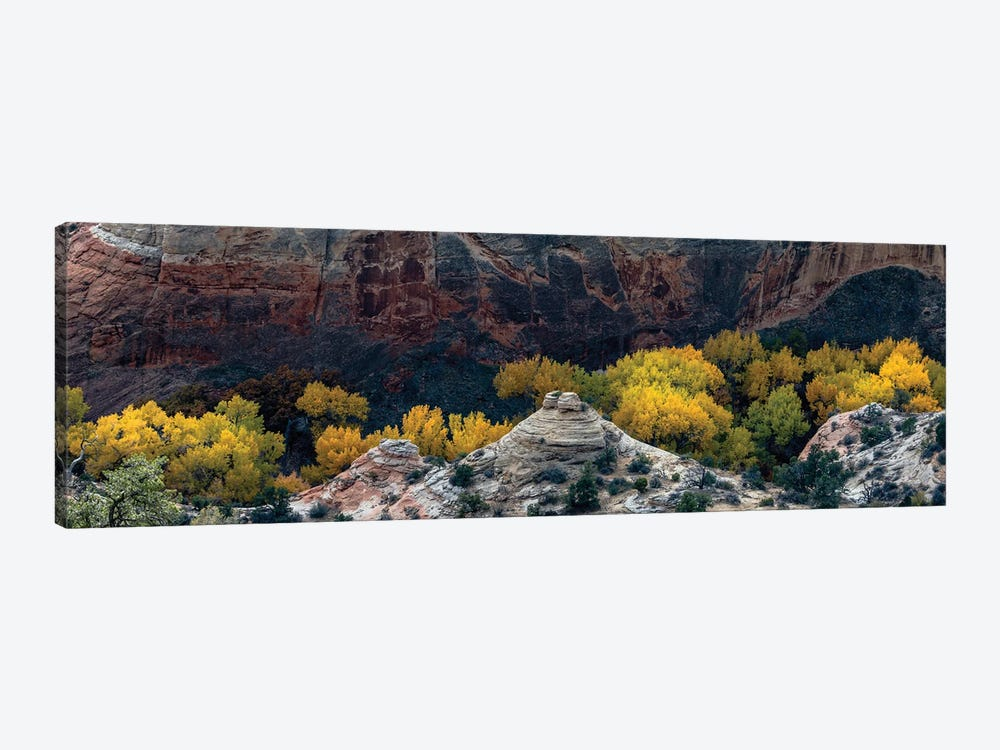 USA, Utah. Autumn cottonwoods and sandstone formations in canyon, Grand Staircase-Escalante National Monument. by Judith Zimmerman 1-piece Canvas Art