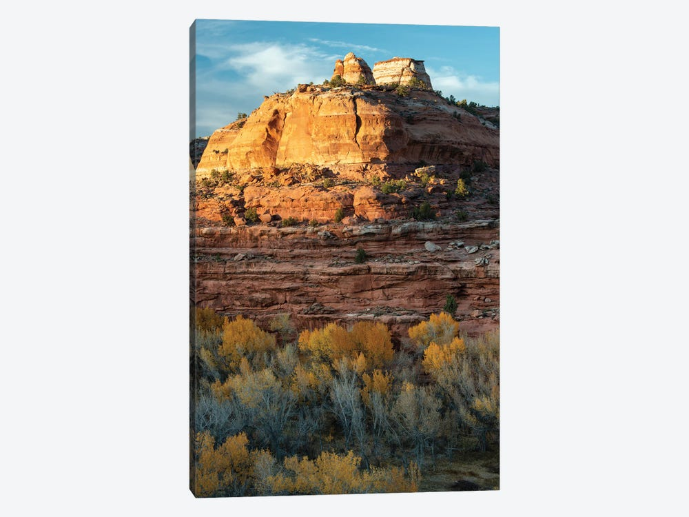 USA, Utah. Last light on sandstone monolith with autumn cottonwoods, Grand Staircase-Escalante National Monument. by Judith Zimmerman 1-piece Canvas Print