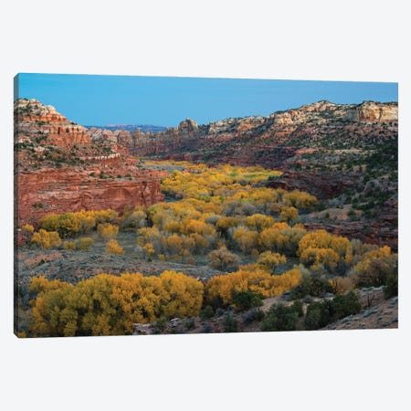 USA, Utah. Autumn cottonwoods and sandstone formations in canyon, Grand Staircase-Escalante National Monument. 3-Piece Canvas #JZI19} by Judith Zimmerman Canvas Print