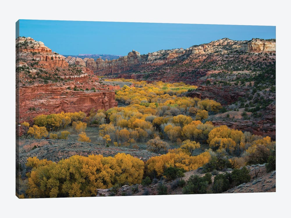 USA, Utah. Autumn cottonwoods and sandstone formations in canyon, Grand Staircase-Escalante National Monument. by Judith Zimmerman 1-piece Canvas Artwork