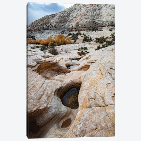 USA, Utah. Waterpockets and autumnal cottonwood trees, Grand Staircase-Escalante National Monument. Canvas Print #JZI20} by Judith Zimmerman Canvas Wall Art