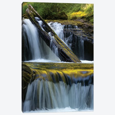 USA. Fallen leaf and waterfall reflections on Sweet Creek, Siuslaw National Forest Canvas Print #JZI3} by Judith Zimmerman Canvas Art