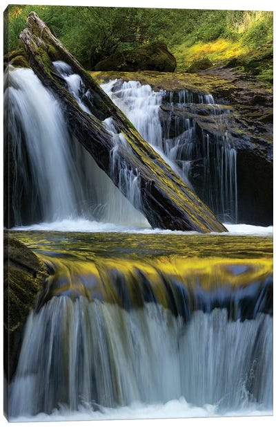 USA. Fallen leaf and waterfall reflections on Sweet Creek, Siuslaw National Forest Canvas Art Print