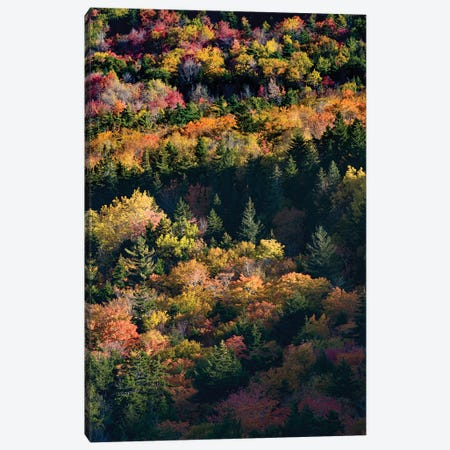 USA, Maine. Autumn foliage viewed from atop The Bubbles near Jordan Pond, Acadia National Park. Canvas Print #JZI4} by Judith Zimmerman Canvas Art Print