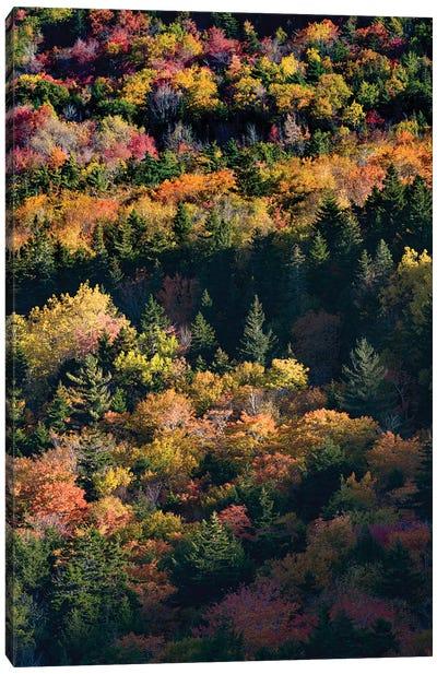 USA, Maine. Autumn foliage viewed from atop The Bubbles near Jordan Pond, Acadia National Park. Canvas Art Print