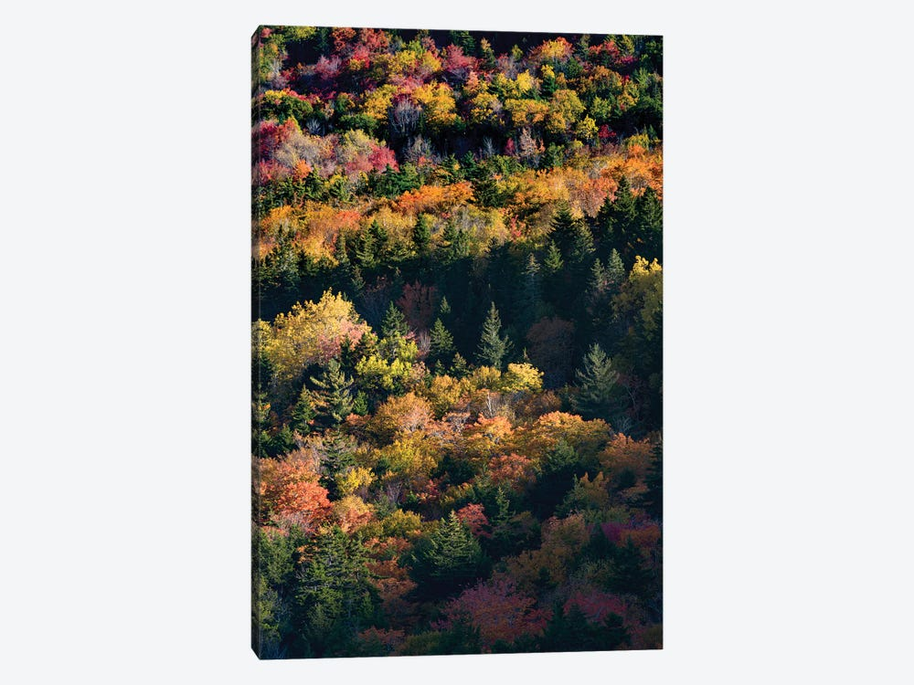 USA, Maine. Autumn foliage viewed from atop The Bubbles near Jordan Pond, Acadia National Park. by Judith Zimmerman 1-piece Canvas Art