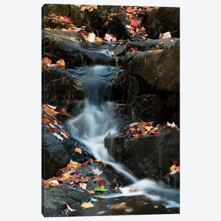 USA, Maine. Autumn leaves along small waterfall on Duck Brook, Acadia National Park. Canvas Print #JZI5} by Judith Zimmerman Canvas Print