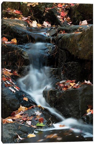 USA, Maine. Autumn leaves along small waterfall on Duck Brook, Acadia National Park. Canvas Art Print