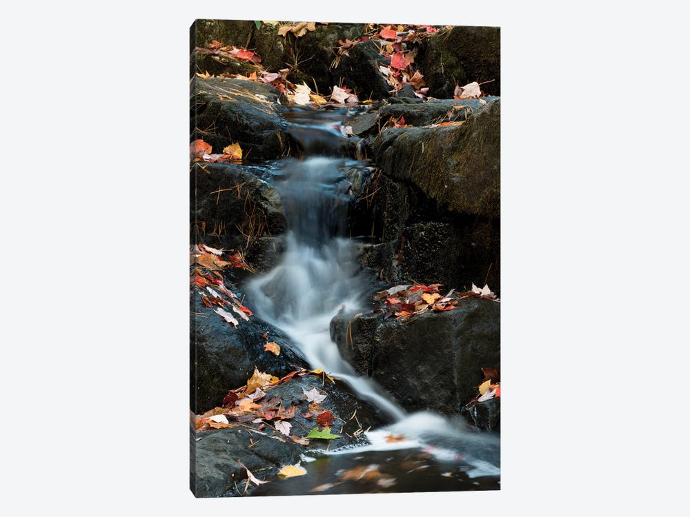 USA, Maine. Autumn leaves along small waterfall on Duck Brook, Acadia National Park. by Judith Zimmerman 1-piece Canvas Art Print