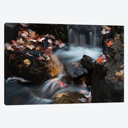 USA, Maine. Autumn leaves along small waterfall on Duck Brook, Acadia National Park. Canvas Print #JZI6} by Judith Zimmerman Canvas Print