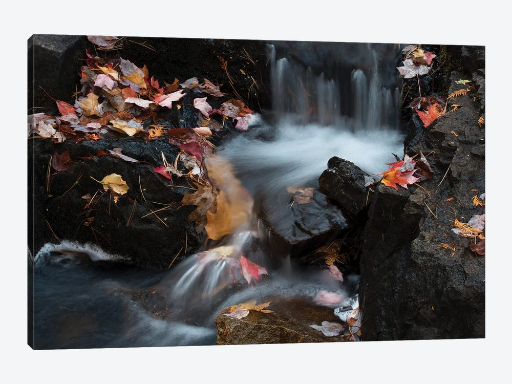 USA, Maine. Autumn leaves along small waterfall on Duck Brook, Acadia National Park. by Judith Zimmerman 1-piece Canvas Artwork