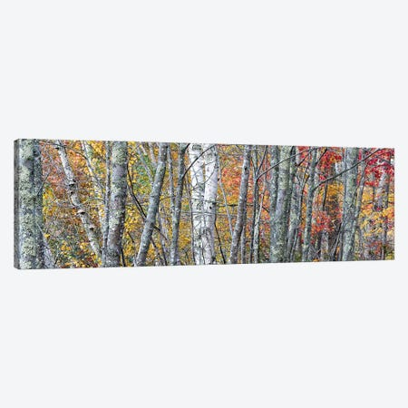 USA, Maine. Colorful autumn foliage in the forests of Sieur de Monts Nature Center. Canvas Print #JZI7} by Judith Zimmerman Art Print