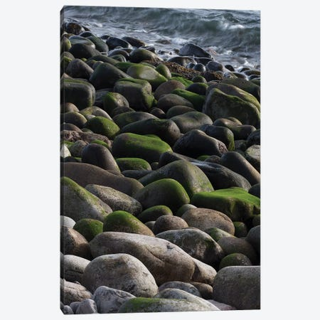USA, Maine. Moss covered rocks and ocean, Boulder Beach, Acadia National Park. Canvas Print #JZI8} by Judith Zimmerman Canvas Artwork