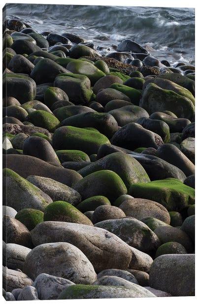 USA, Maine. Moss covered rocks and ocean, Boulder Beach, Acadia National Park. Canvas Art Print