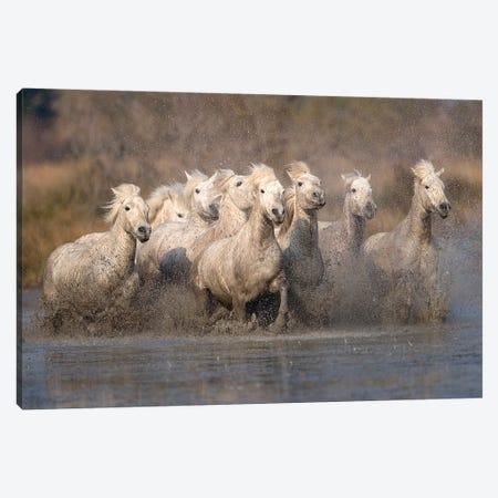 Galloping Herd Of Camargue Horses I, Camargue, Provence-Alpes-Cote d'Azur, France 3-Piece Canvas #JZU2} by Jim Zuckerman Canvas Art Print