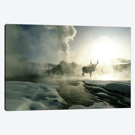 Bull Elk Silhouette At Sunrise, Castle Geyser, Upper Geyser Basin, Yellowstone National Park, Wyoming, USA Canvas Print #JZU6} by Jim Zuckerman Canvas Artwork