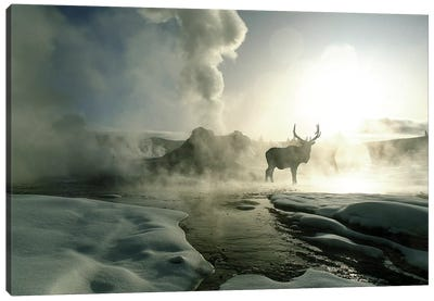 Bull Elk Silhouette At Sunrise, Castle Geyser, Upper Geyser Basin, Yellowstone National Park, Wyoming, USA Canvas Art Print