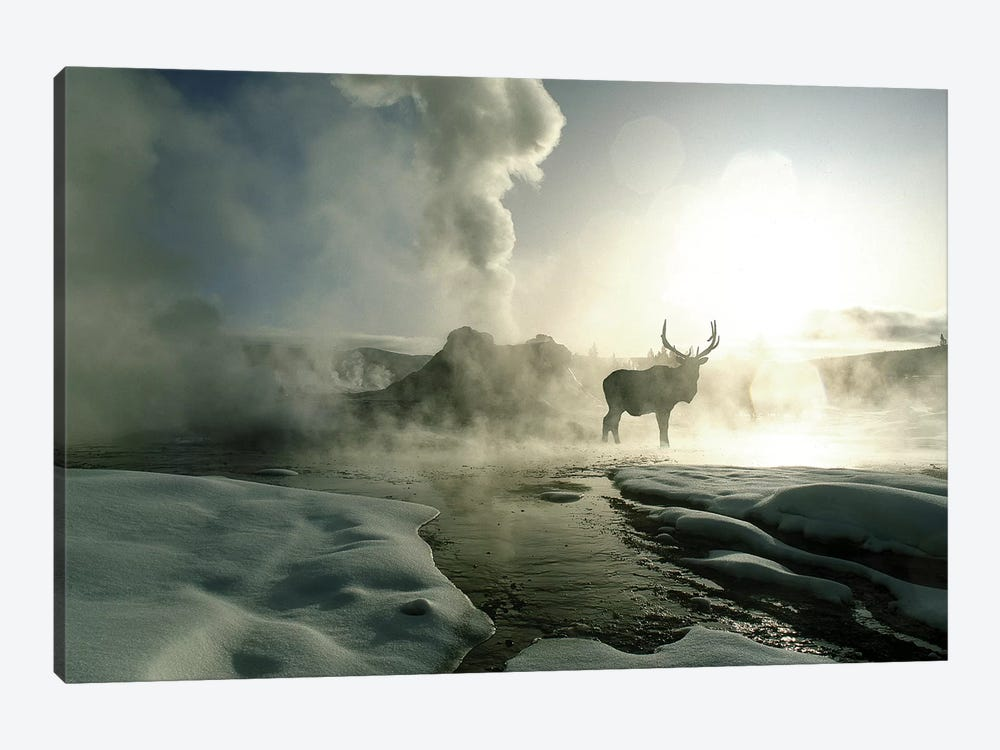Bull Elk Silhouette At Sunrise, Castle Geyser, Upper Geyser Basin, Yellowstone National Park, Wyoming, USA by Jim Zuckerman 1-piece Canvas Artwork