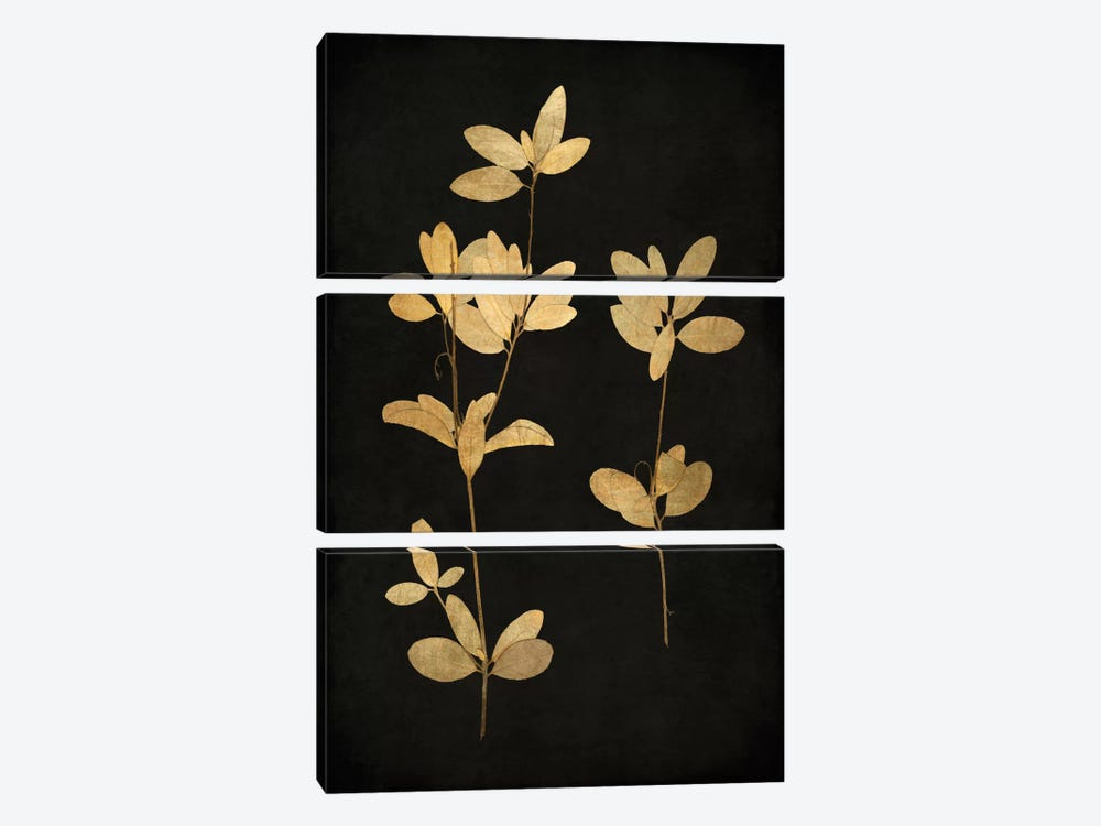 Golden Nature IV by Kate Bennett 3-piece Canvas Art Print