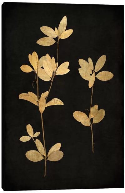 Golden Nature IV Canvas Art Print